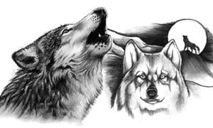 Вовки-сіроманці